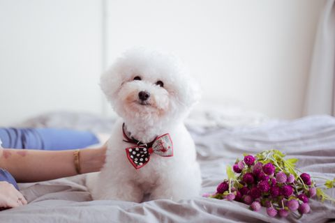 Stuffed toy, Toy, Textile, Dog, Pink, Dog breed, Carnivore, Toy dog, Linens, Companion dog,
