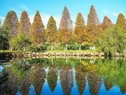Reflection, Natural landscape, Nature, Tree, Biome, Plant, American larch, Woody plant, Leaf, Symmetry,