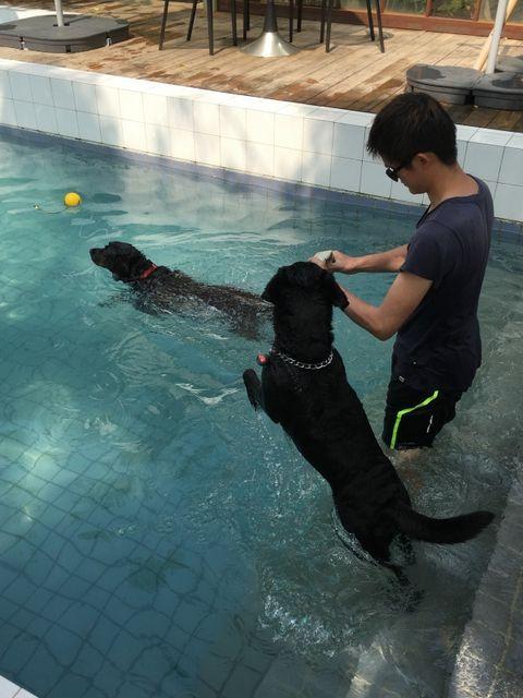 Human, Human body, Dog, Swimming pool, Dog breed, Vertebrate, Leisure, Carnivore, Sporting Group, Aqua,