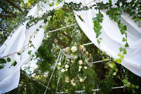 Botany, Grapevine family, Vitis, Annual plant,