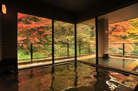 Property, Tree, Architecture, Room, House, Leaf, Home, Reflection, Interior design, Building,