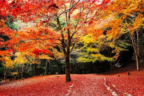 Tree, Leaf, Natural landscape, Nature, Deciduous, Autumn, Red, Sky, Natural environment, Orange,