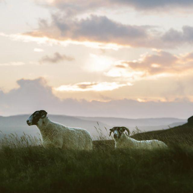 Chasing-Sheep-Gear-Patrol-Lead-Full
