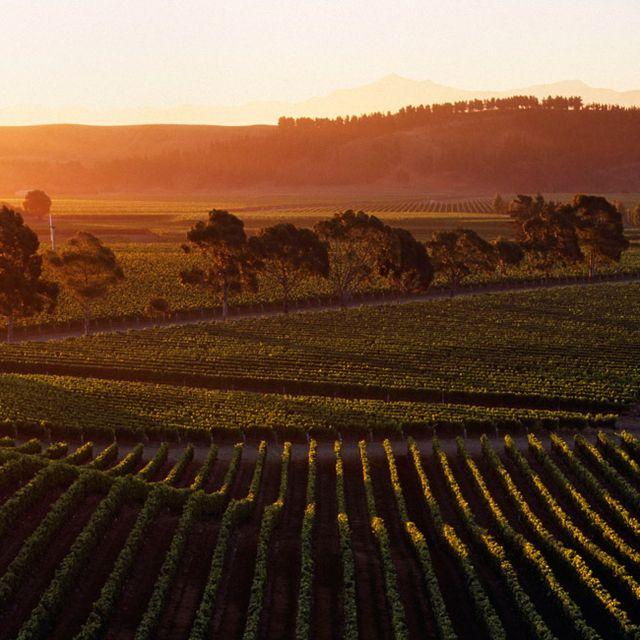 best-wineries-of-new-zealand-gear-patrol-lead-full