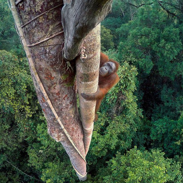 wildlife-photo-of-the-year-tim-laman-gear-patrol