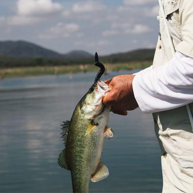 texas-rig-bass-gear-patrol-lead-full