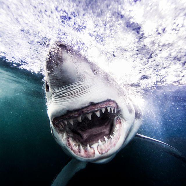 shark-4-gear-patrol-970