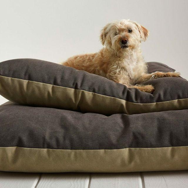 Parachute-Dog-Bed-gear-patrol-full-lead