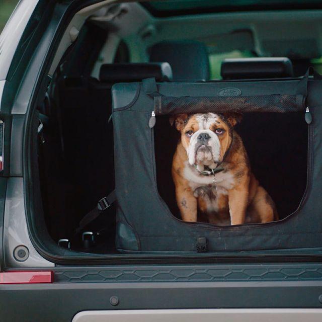 Land-Rover-Dog-Acc-gear-patrol-full-lead