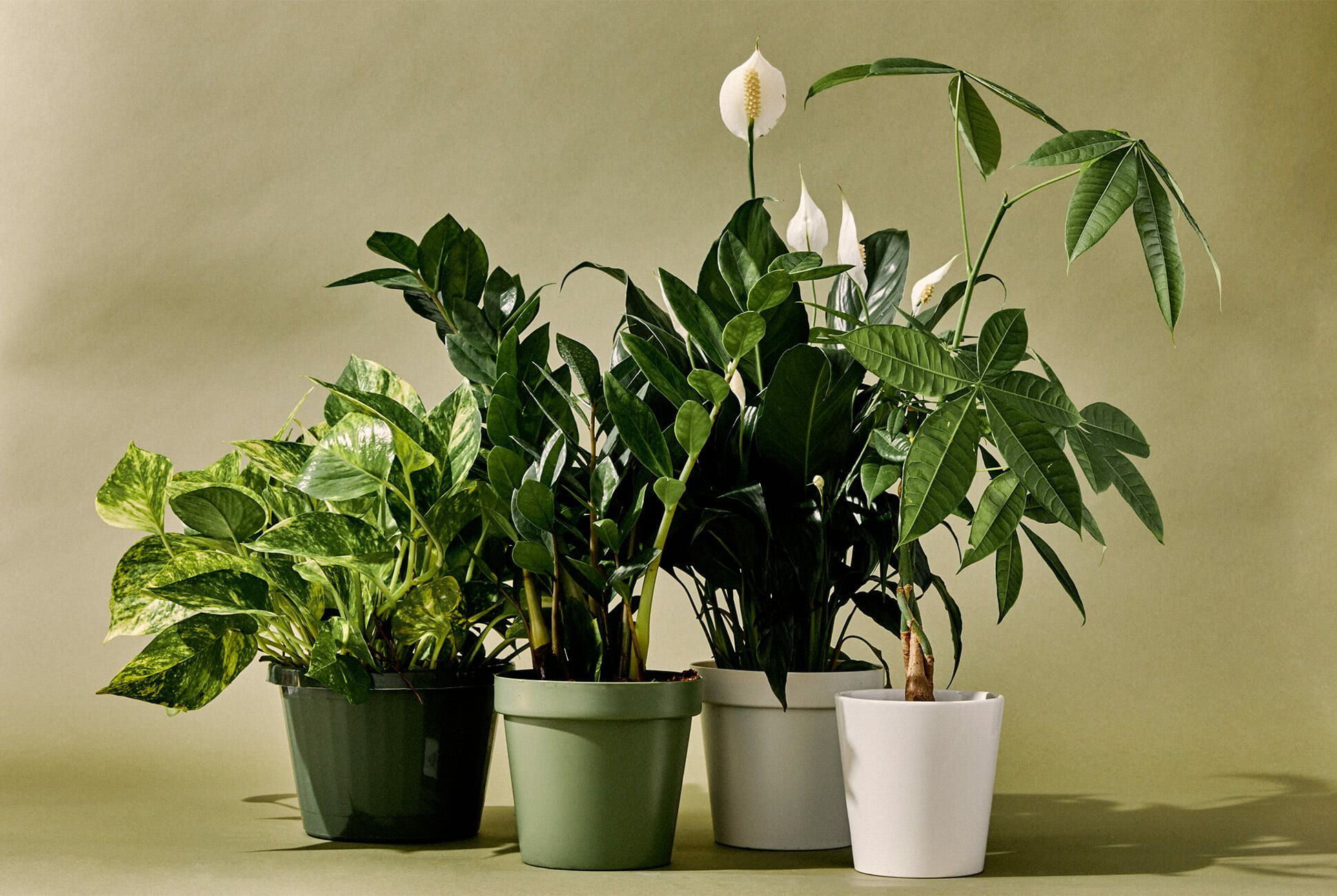 5 Best Indoor Plants For Bathroom
