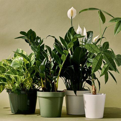 10 best indoor plants gear patrol lead full