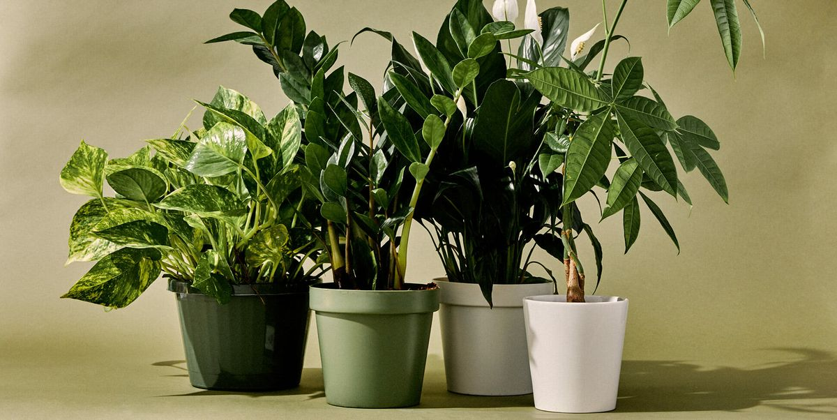 The 24 Best Indoor Plants for Every Kind of Person