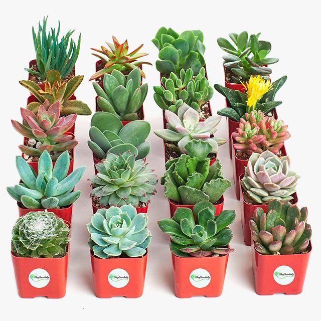 Shop-Succulents-gear-patrol-full-lead