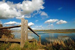 Nature, Wood, Natural landscape, Daytime, Sky, Natural environment, Cloud, Atmosphere, Landscape, Photograph,