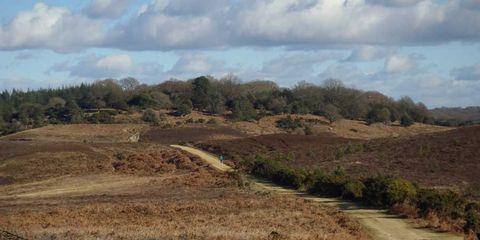 Plant community, Soil, Ecoregion, Land lot, Shrubland, Cumulus, Grassland, Trail, Rural area, Grass family,