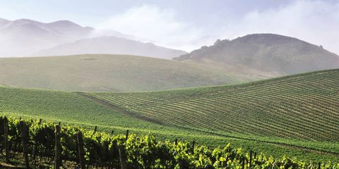 Peter Greenberg recommends taking a road trip through the Santa Barbara and Santa Ynez wine regions of California.