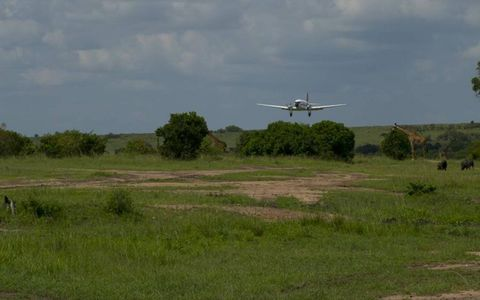 A DC3 prop plane from Mobassa Air Safari lands on a dirt airstrip…flying over giraffes and wart hogs, in the Masa Marai.