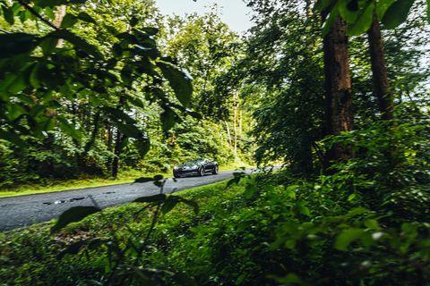 Vegetation, Tree, Green, Nature, Natural environment, Nature reserve, Forest, Jungle, Leaf, Biome,