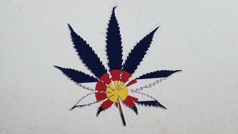 Leaf, Plant,