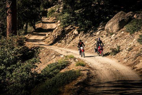 Trail, Downhill mountain biking, Mountain bike, Vehicle, Freeride, Mountain biking, Bicycle, Tree, Recreation, Cycle sport,