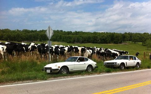 We parked the cars next to this field, and cows started gathering near them.