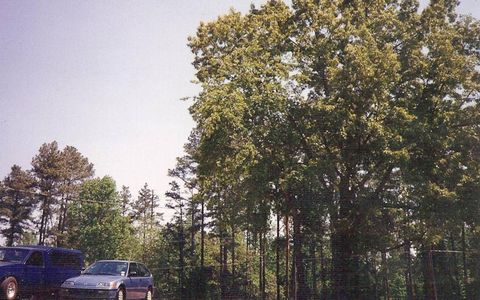 """""""Miss that truck more than anything or anybody,"""" says the drummer today. You'd think he might've taken a better photo of it. Nissan Hardbody, lower left, somewhere in America, 1994."""