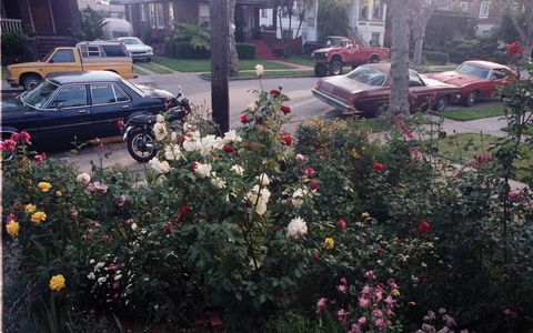 Intended to be a photograph of my mom's rosebushes, this shot captured many interesting vehicles.