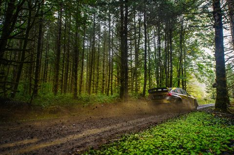 Woodland, Forest, Nature, Natural environment, Tree, Biome, Natural landscape, Vehicle, Dirt road, Old-growth forest,