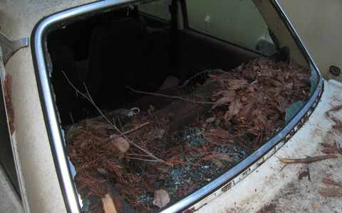 Thanks to the missing rear glass, rain and wildlife destroyed this car's interior.