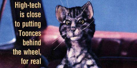 Organism, Vertebrate, Whiskers, Felidae, Carnivore, Small to medium-sized cats, Cat, Iris, Snout, Terrestrial animal,