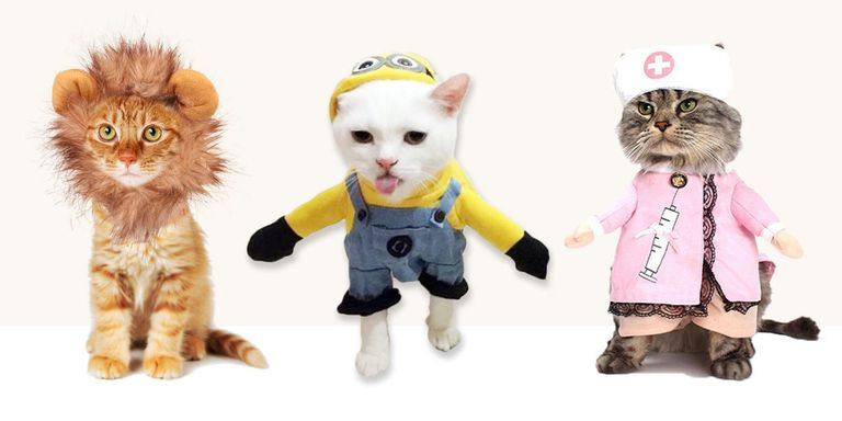 14 Best Cat Costumes for Halloween 2016 - Hilarious Costumes for Cats