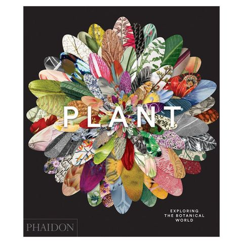 Plant: Exploring the Botanical World