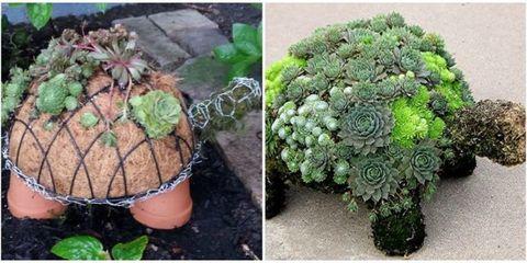 Organism, Flowerpot, Leaf, Soil, Botany, Terrestrial plant, Houseplant, Flowering plant, Annual plant, Shrub,
