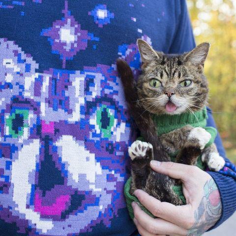 lil bub sweater