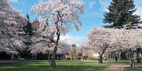 washington.edu