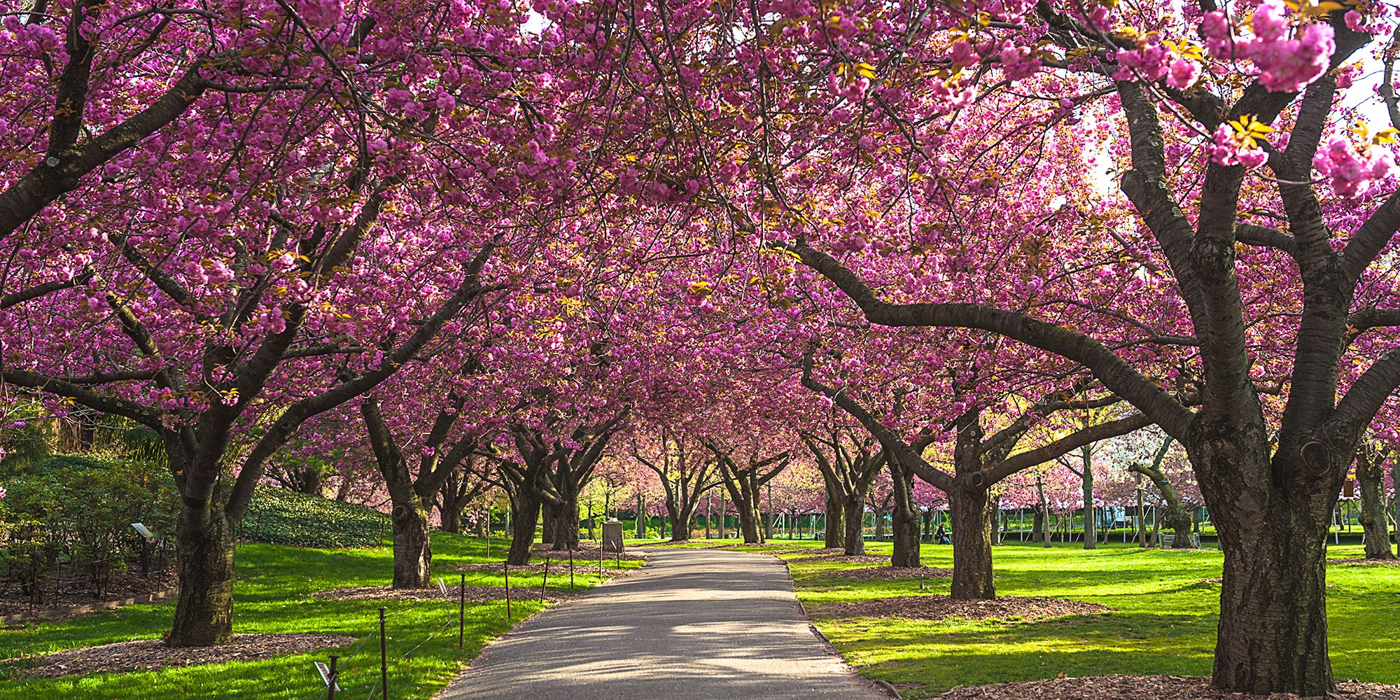 12 best places to see cherry blossoms in spring 2018 where to see