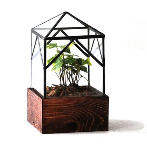 LeadHead Glass Ellias Trap Terrarium