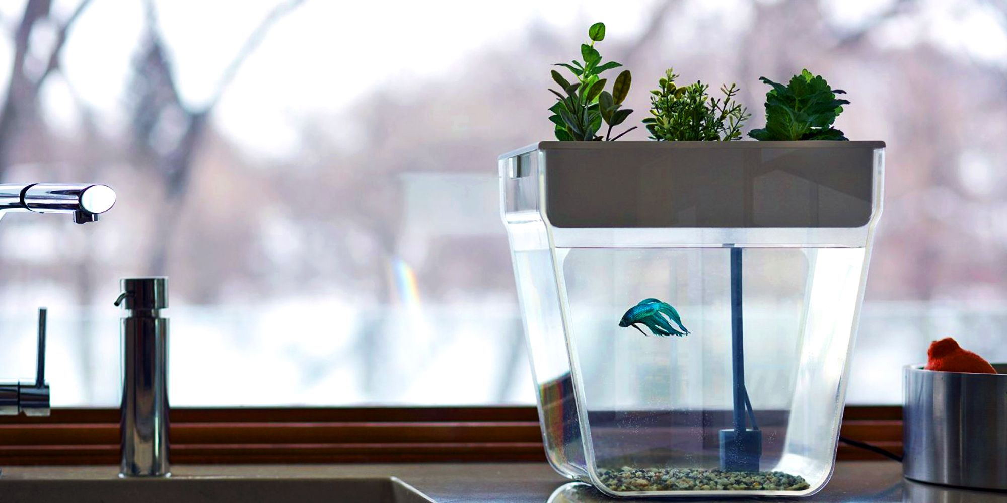 Nice 5 Best Aquatic Ecosystems Of 2018   Freshwater Aquatic Ecosystems And  Terrariums