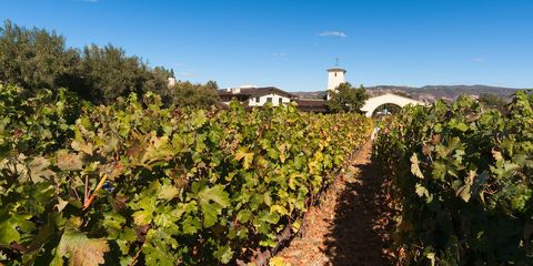 Robert Mondavi  - Napa wineries
