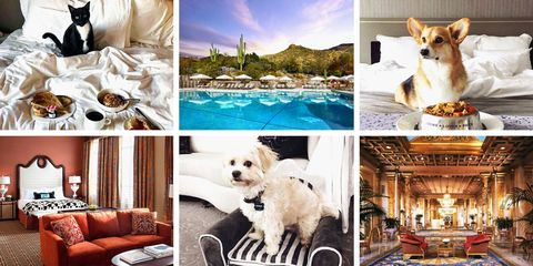 9 Best Pet Friendly Hotels For 2018 Hotels Accommodations That