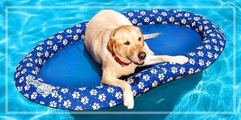 Dog Days Summer