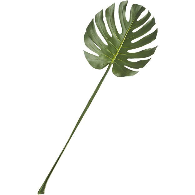 CB2 Monstera Leaf