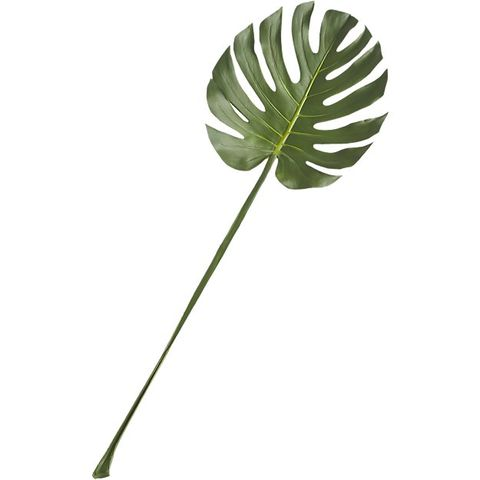CB2 Monstera Leaf