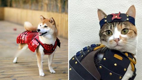 Collar, Dress shirt, Carnivore, Vertebrate, Dog supply, Dog, Pattern, Cat, Snout, Felidae,