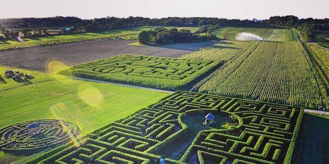 corn mazes in New York