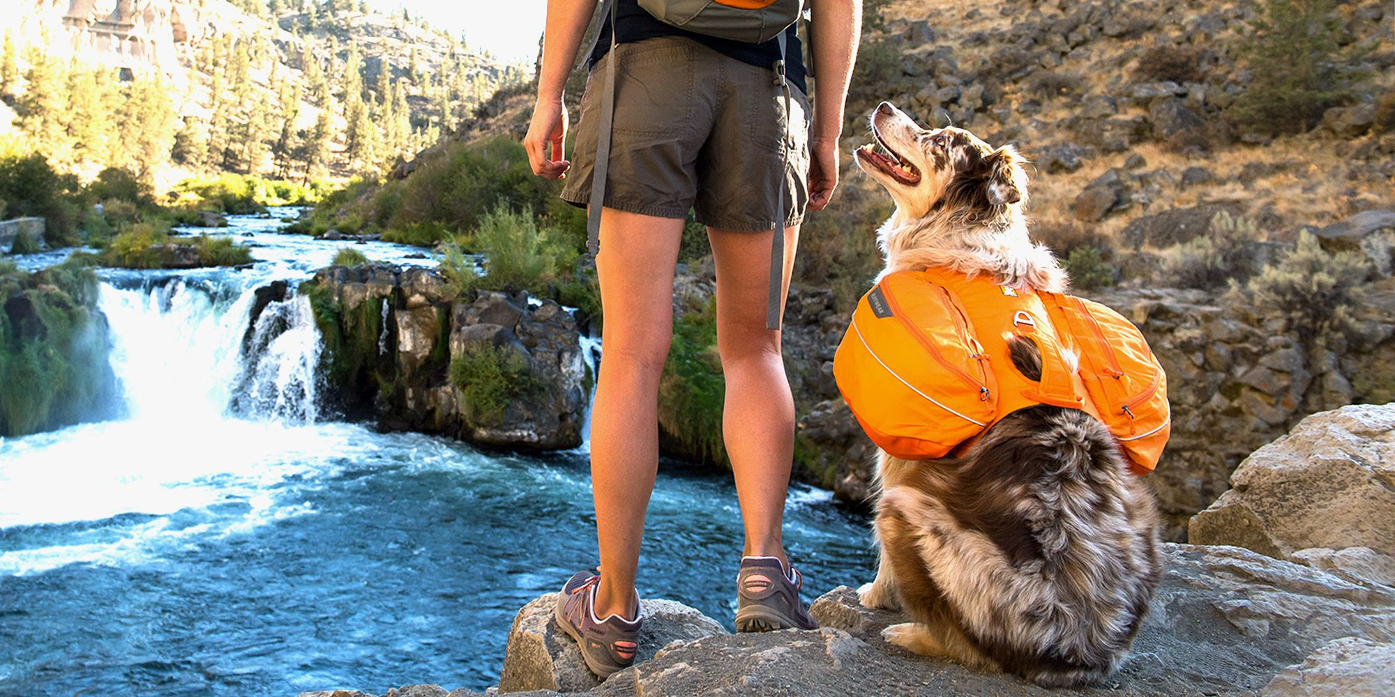 dfadd10c4c 9 Best Dog Backpacks for Hiking and Camping 2018 - Small Backpacks ...