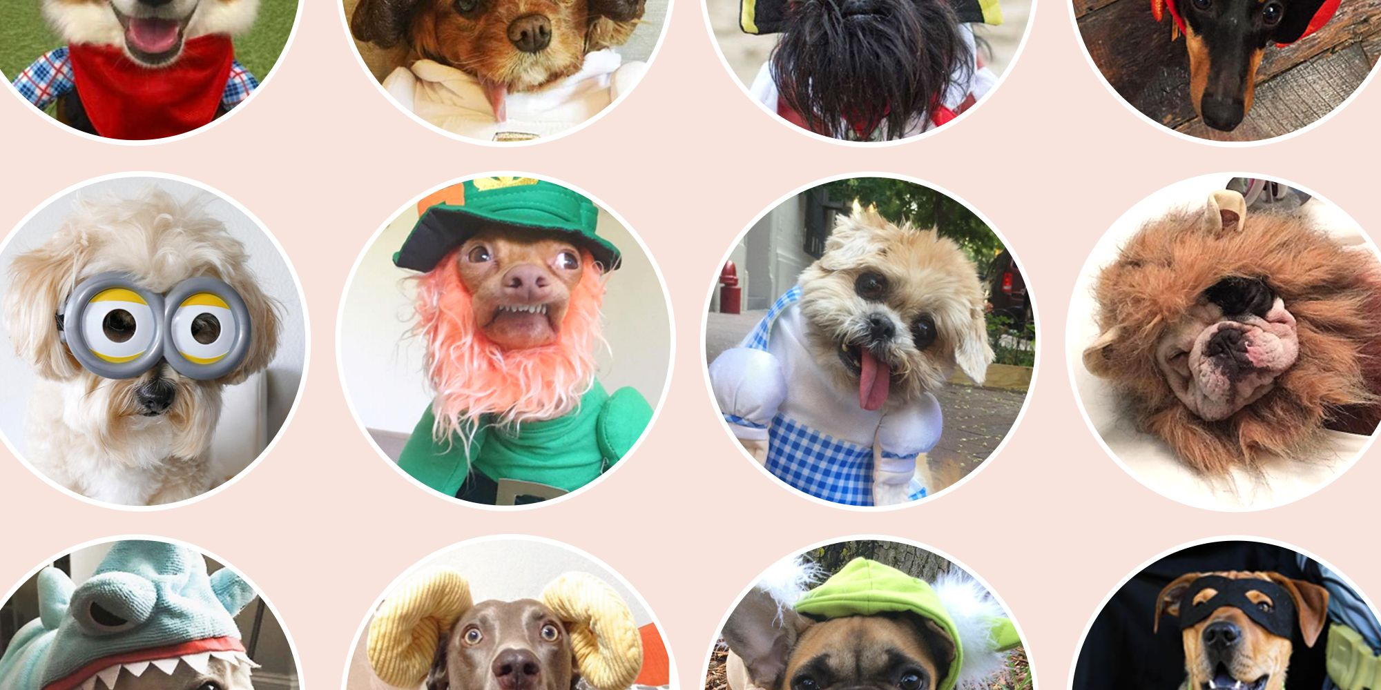 35 best dog costumes for halloween 2018 - cute halloween costumes