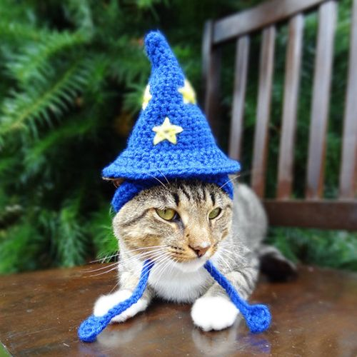 14 Best Cat Costumes for Halloween 2018 - Hilarious Costumes for Cats