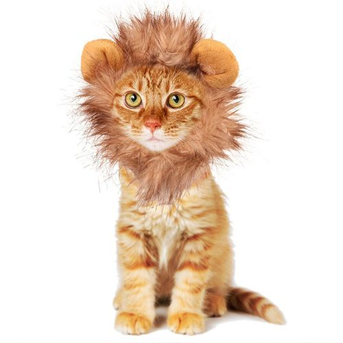 sc 1 st  BestProducts.com & 16 Best Cat Costumes for Halloween 2018 - Hilarious Costumes for Cats