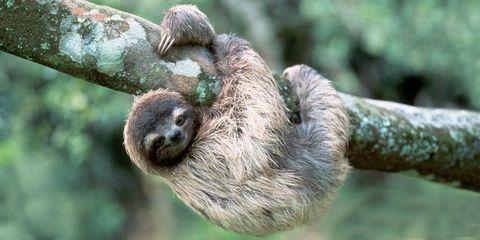 sleepover with sloths